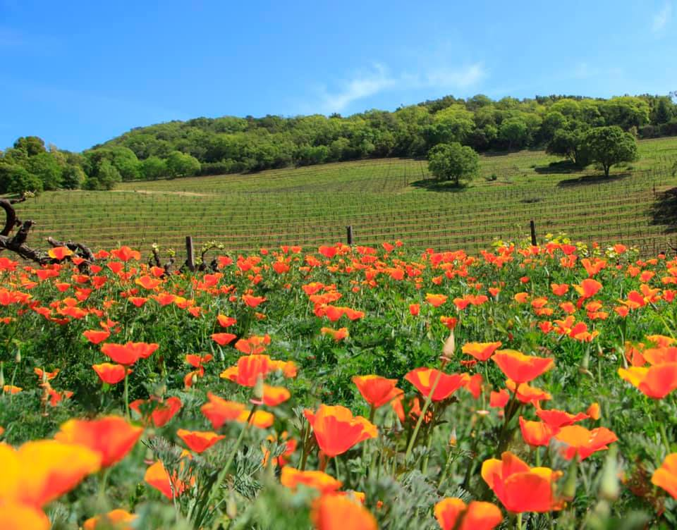Wineries with The Most Beautiful Gardens