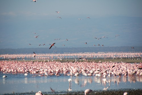 Lake Nukuru Africa Other Must Do's