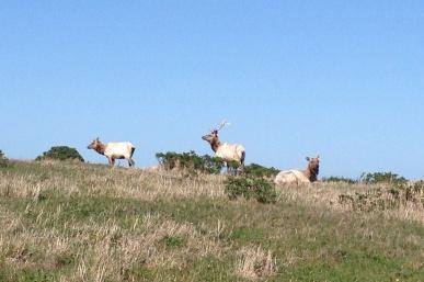Point Reyes Elk Hike at Pierce Point Ranch