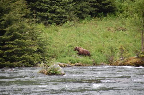 Bear Watching In Alaska