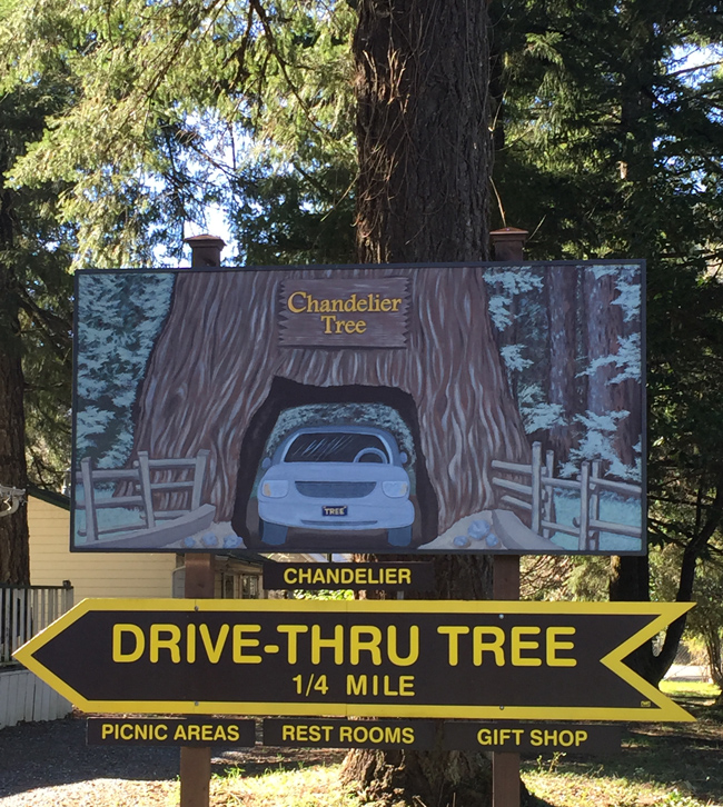 Chandelier Tree A Clark Griswold Must See In California\'s Redwoods ...