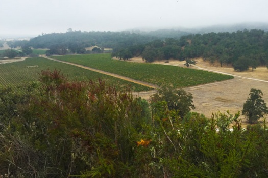 The Best Zip Lining In California's Wine Country at Margarita Adventures