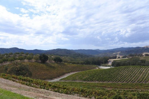 Top 10 Paso Robles Wineries To Visit