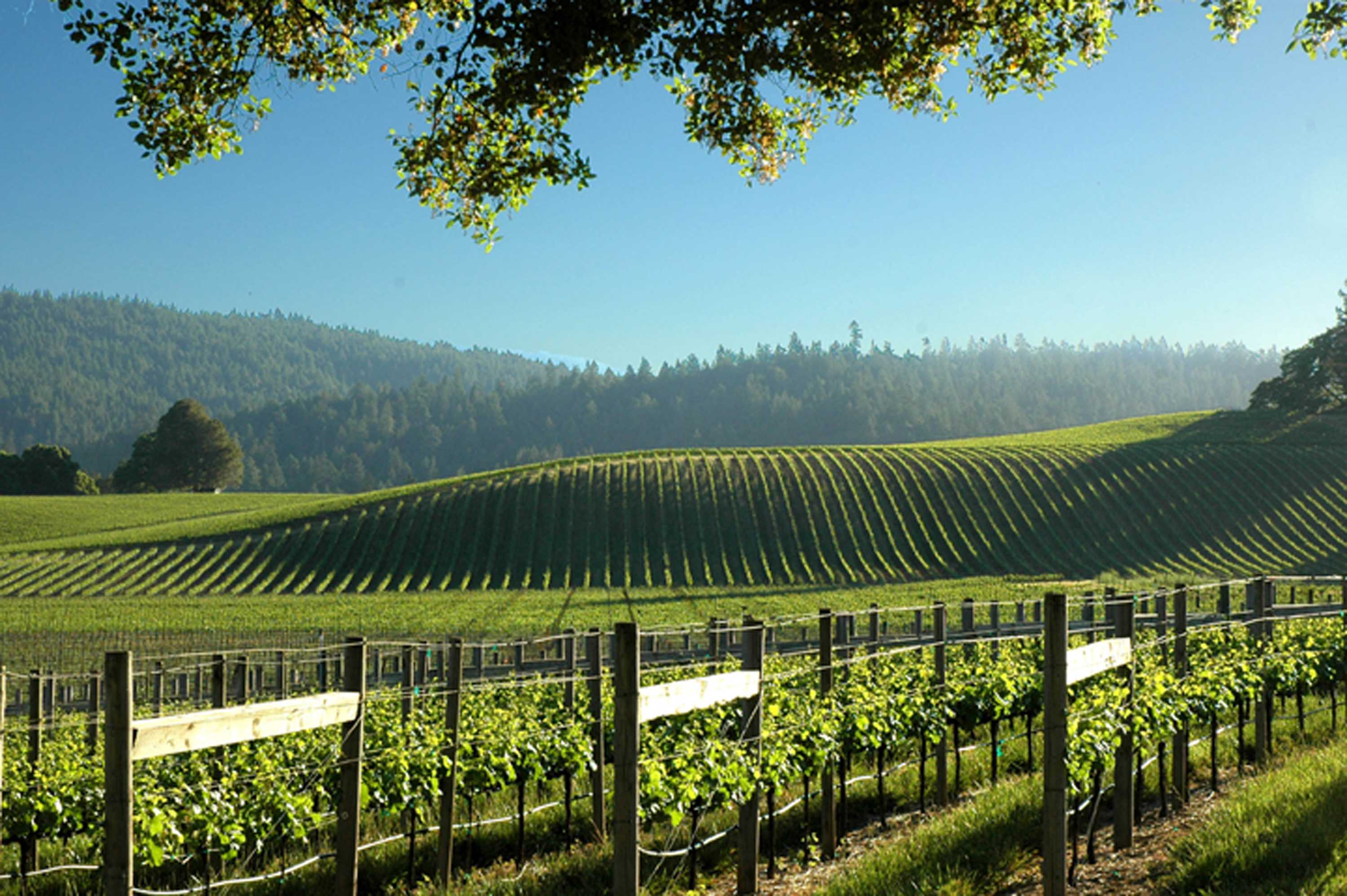 Goldeneye Winery An Anderson Valley Gem The Jetsetting