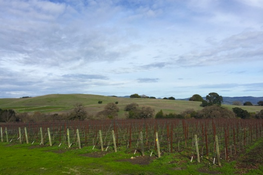 Dunstan Wines From The Fabulous Durell Vineyards