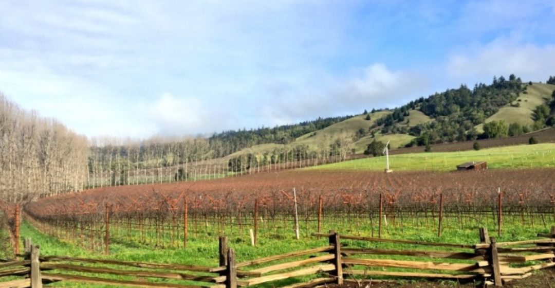 Anderson Valley's Top 10 Wineries & Eats