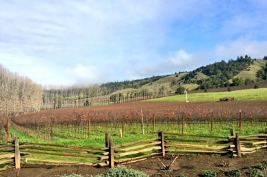 Anderson Valley's Top 10 Wineries You Must Experience