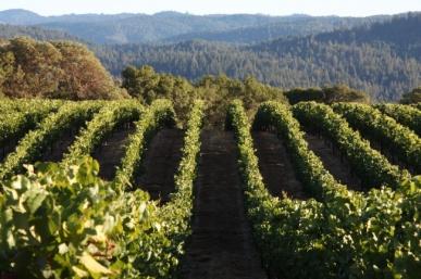 Roederer Estate Tour with Winemaker Arnaud Weyrich