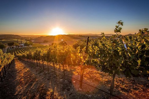 Hollyhock Vineyards With The Most Charming Vineyard Guest House In Paso Robles