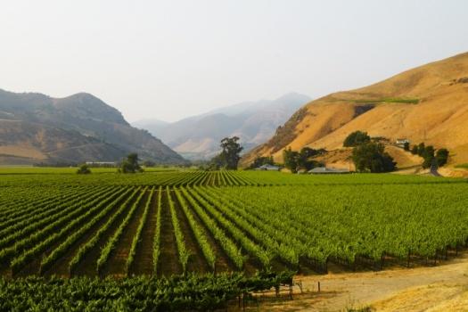 Bien Nacido, A Legendary Santa Barbara Vineyard