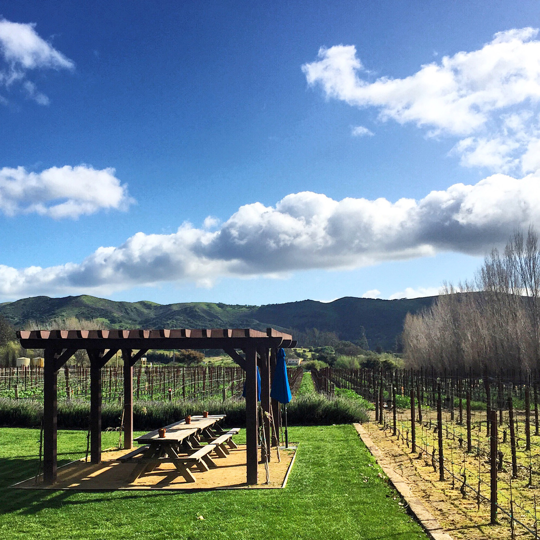 Sta. Rita Hills Wineries