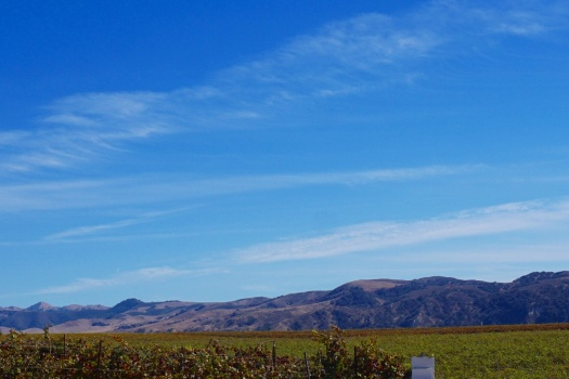 Top 10 Santa Maria Valley Wineries in Santa Barbara County