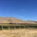 Byron Winery