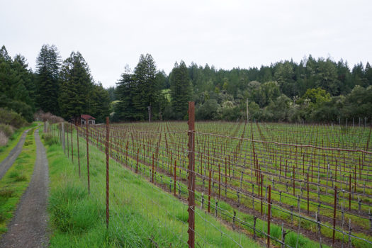 Black Kite Cellars An Anderson Valley Wine To Know
