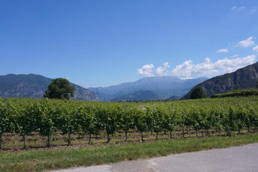 The Organic Barone Pizzini Winery Franciacorta Italy