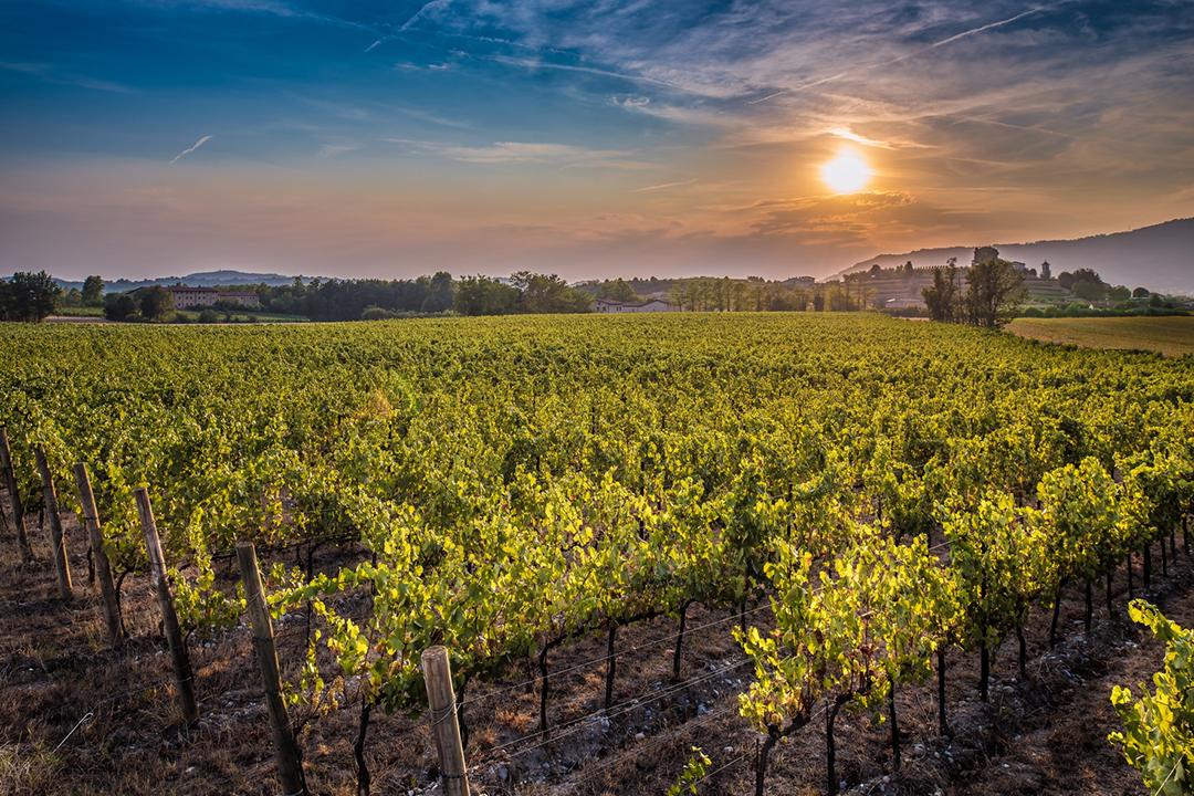 Berluchhi Winery Franciacorta