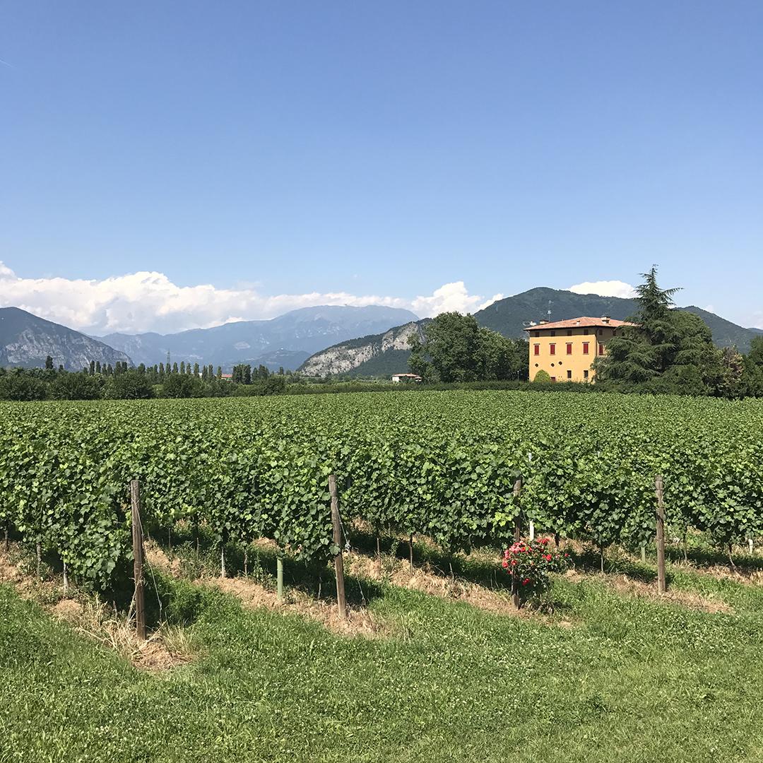 Berlucchi Wines Franciacorta
