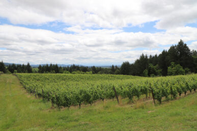 Brick House Wines, Stunning Willamette Valley Oregon Winery