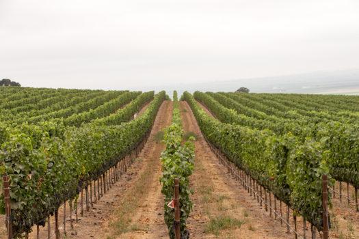 Santa Lucia Highland's Caraccioli Vineyard