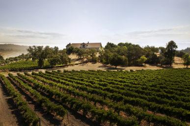 Cardinale Winery Napa's Master Wine Tasting