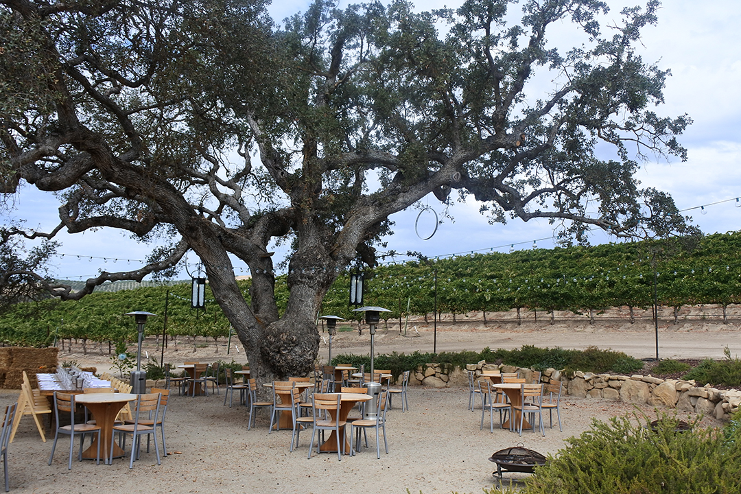 Best Wineries in Paso Robles
