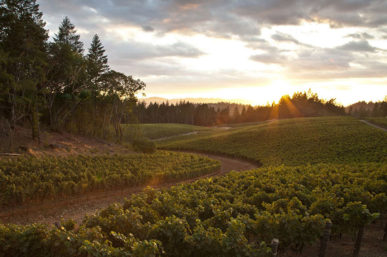 The Top 10 St. Helena Wineries You Must Experience