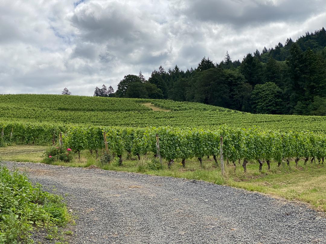 Oregon Vineyards