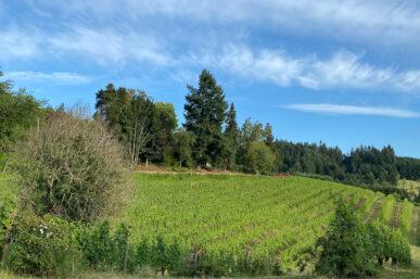 Chehalem Wines Vineyards & Winery Tour in Newberg, Oregon