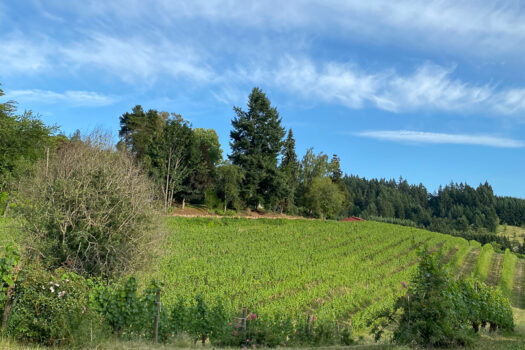 Chehalem Wines Vineyards & Winery Tour in Newberg, Oregon