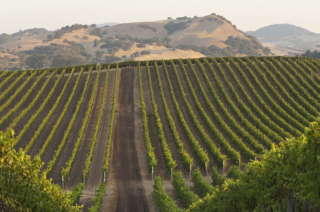 Carneros Top 10 Winers