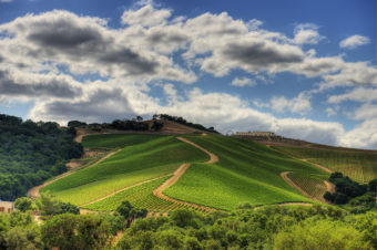 Dauo Winery A Paso Robles Gem You Must Experience