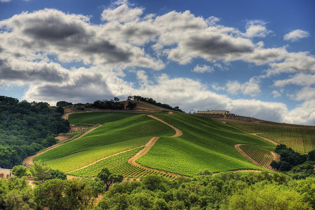 Dauo Winery