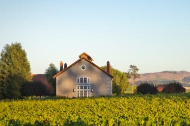 Stunning Etude Winery & Their Amazing Wines