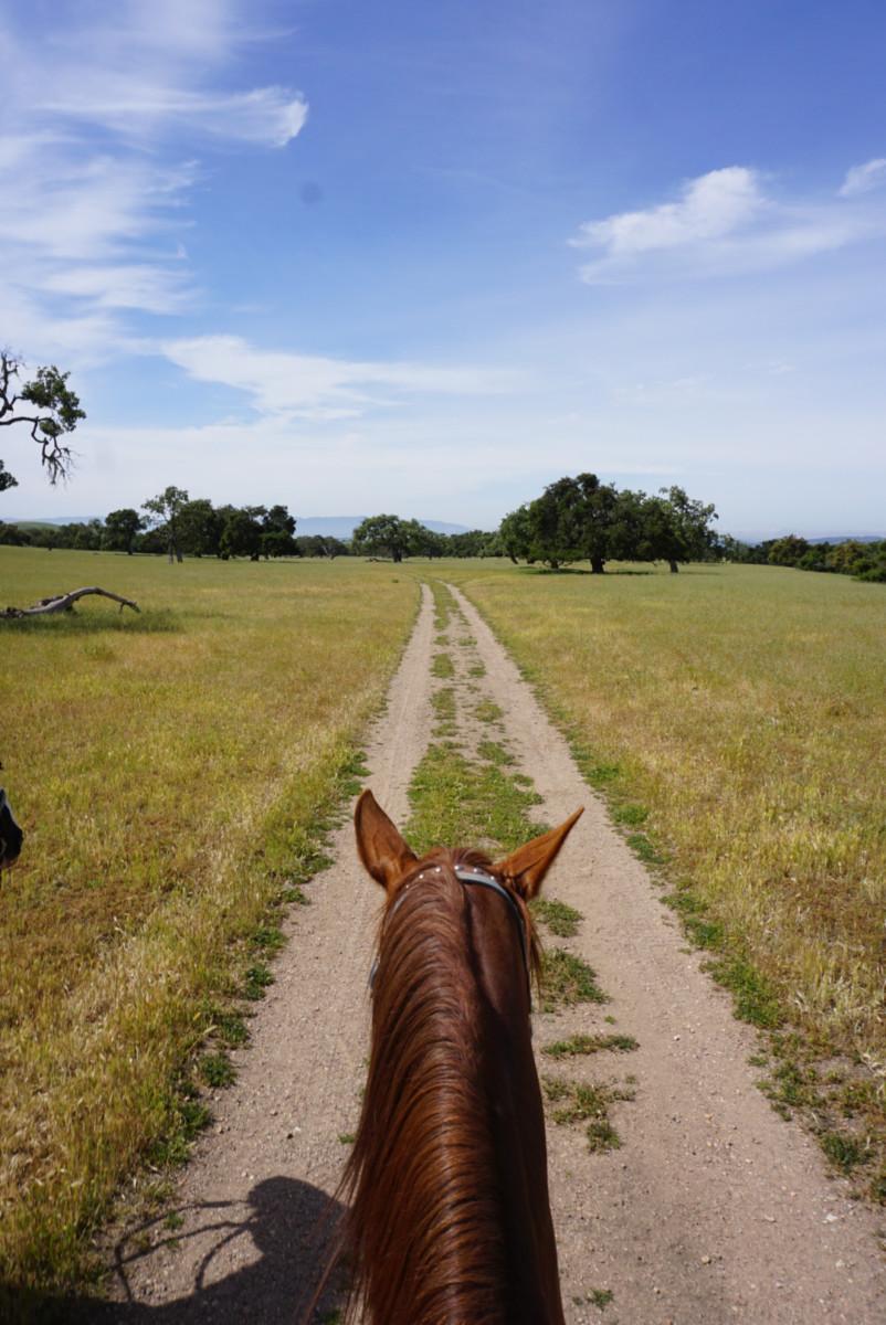 Fess Parker KAP Land & Cattle Horseback Ride
