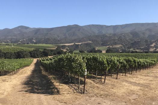 Santa Lucia Highland's Garys' Vineyard