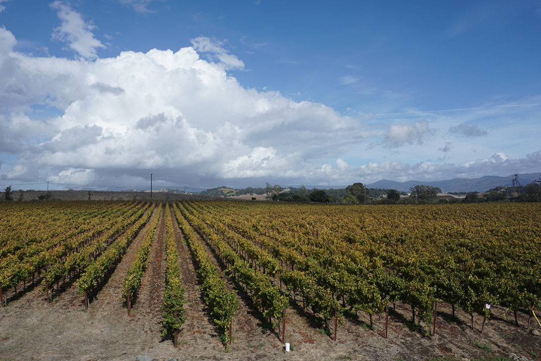 Hyde Estate Winery