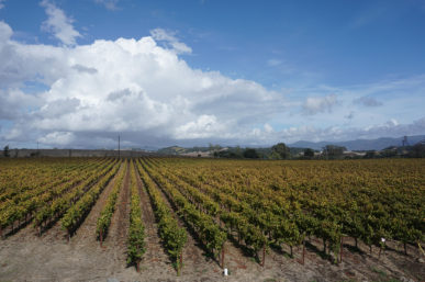 Hyde Estate Winery's Spectacular California Wines