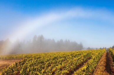 The Most Beautiful Vineyards in California I've Visited & Love