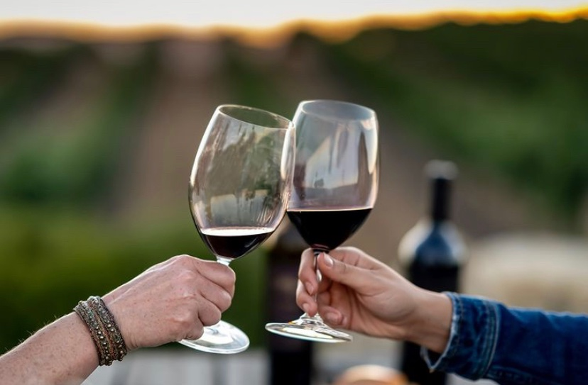 Best Syrah Wines
