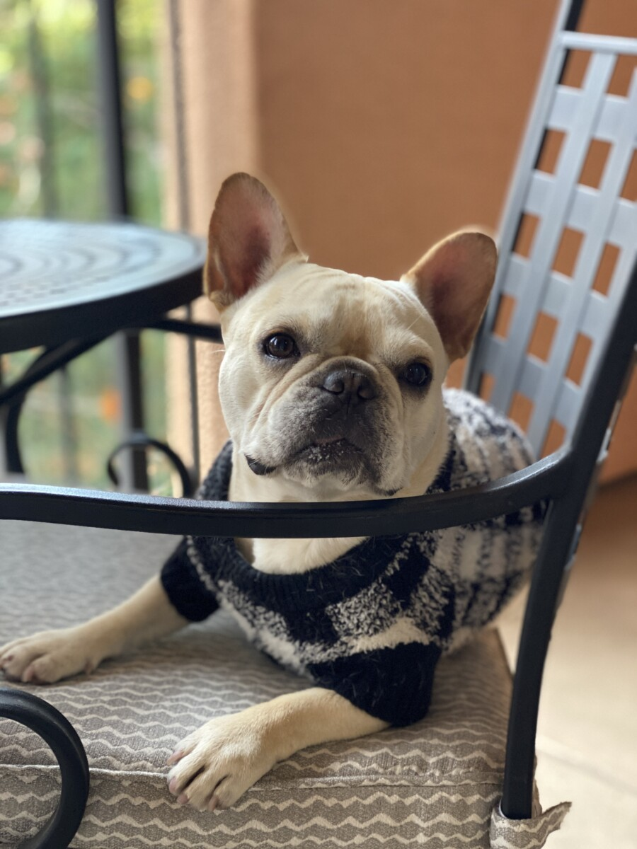 Old Navy Pet Sweater