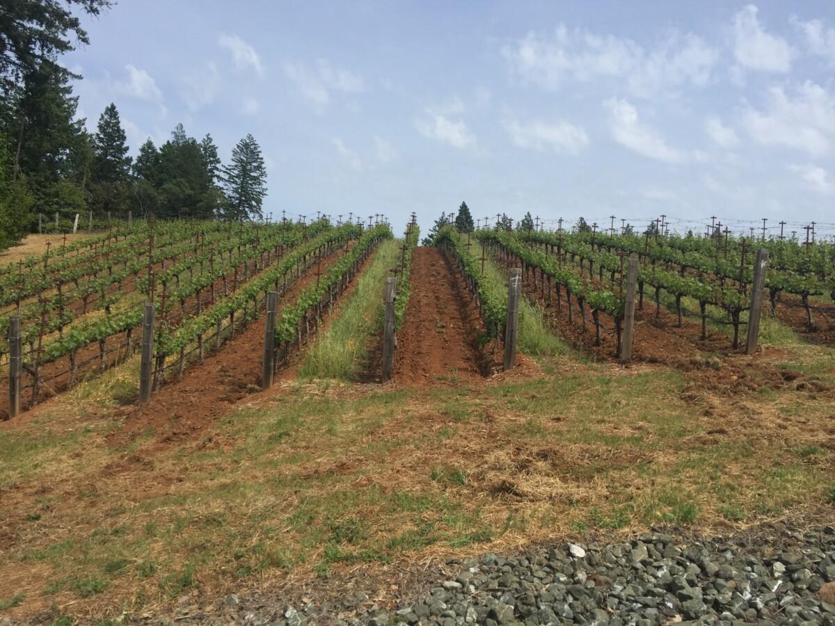 Spectacular California Vineyards