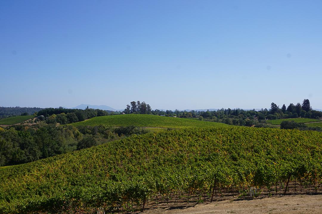 Iron Horse Vineyards