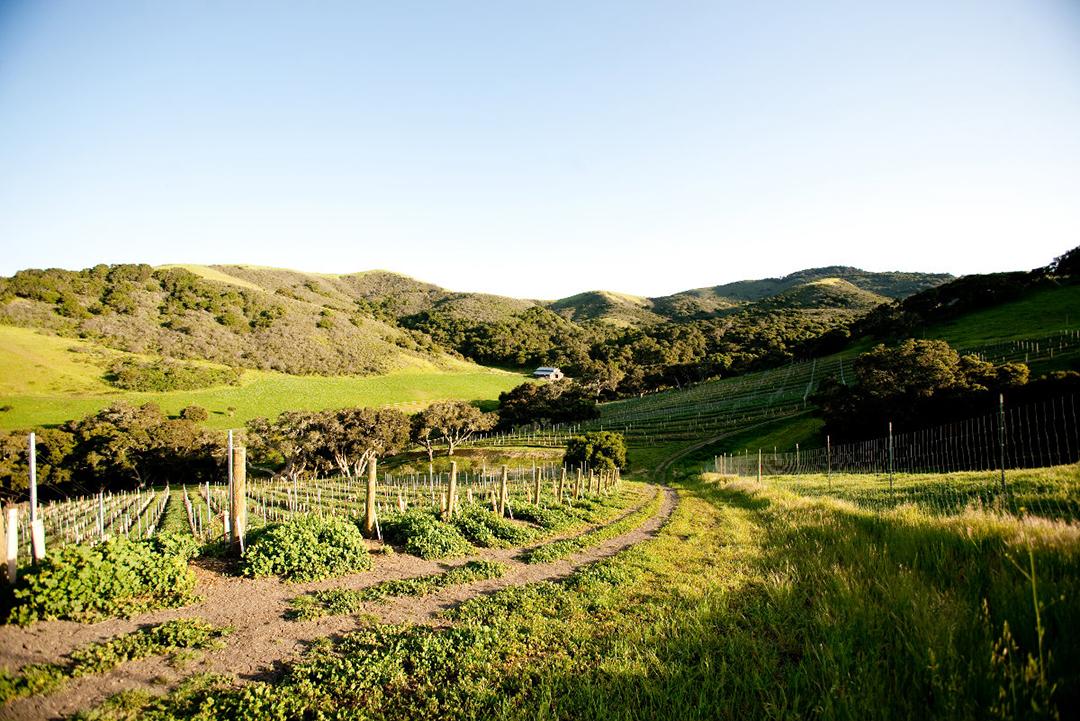 JCR Vineyards Sta Rita Hills