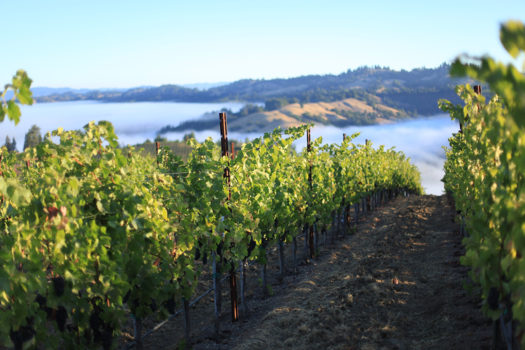 The Best California Sonoma Coast Wineries