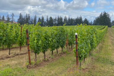 The Top 10 Willamette Valley Wineries Oregon You Must Experience