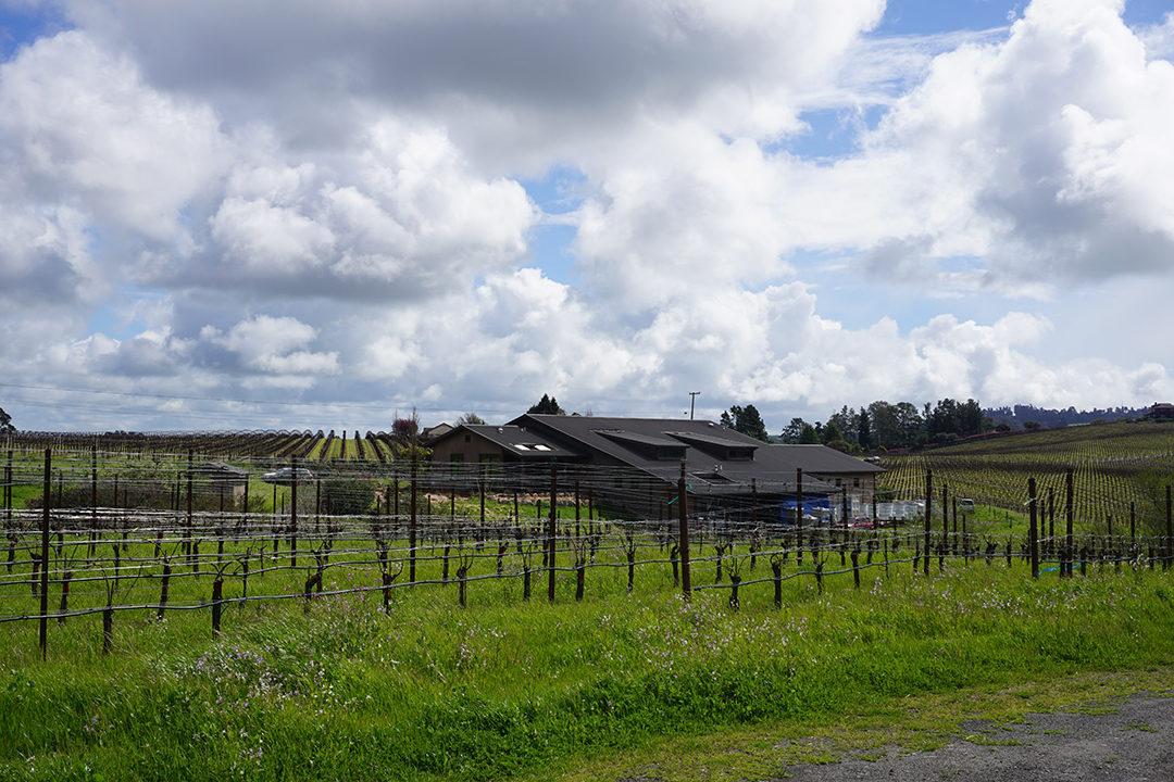 Littoria Wines