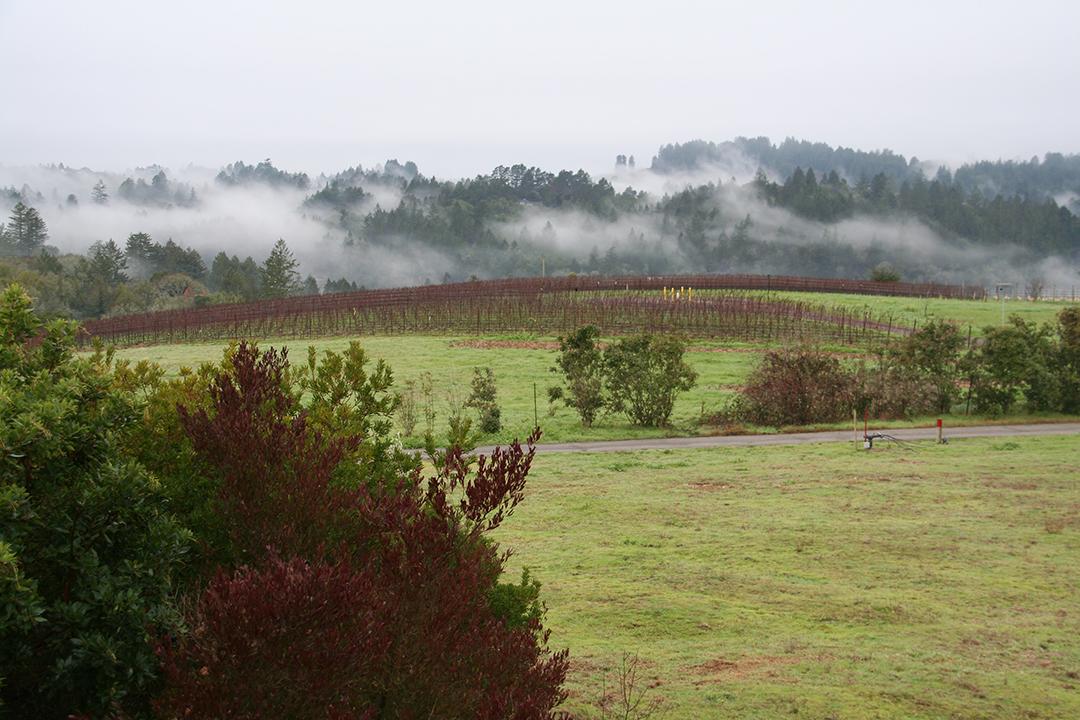 Littoria Winery