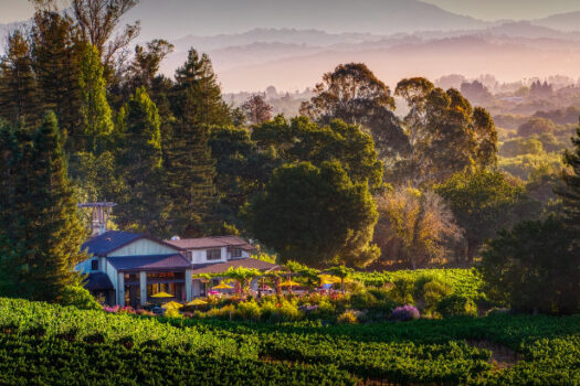 The Best Sebastopol Wineries To Experience