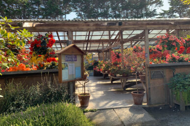 The Lovely Mendocino Coast Botanical Gardens a Mendocino Must See