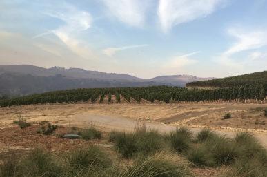 The Best of Sta. Rita Hills Wineries